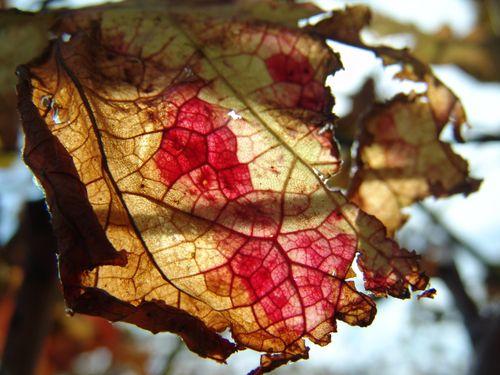 Leaf (20)
