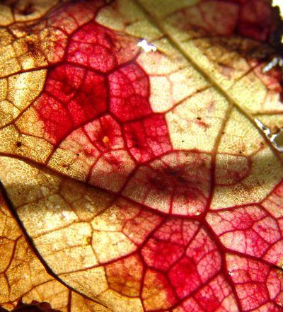 Leaf 2 (20)