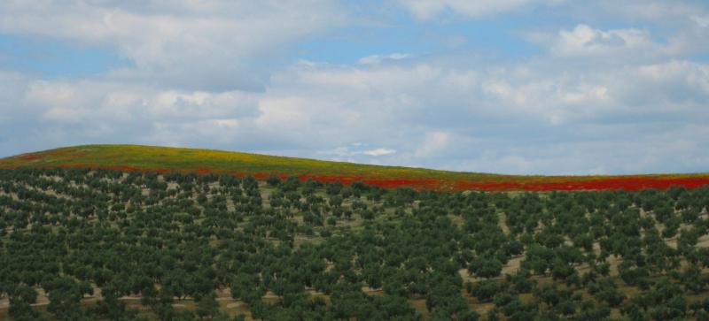 Spain blog (66)