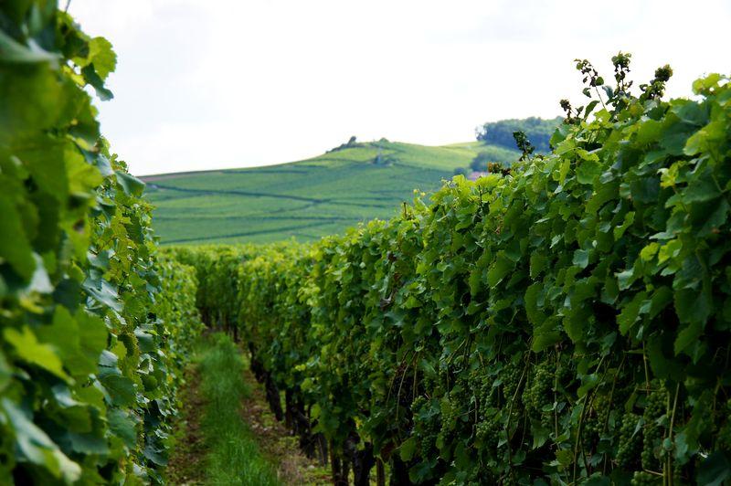 Alsace blog 44