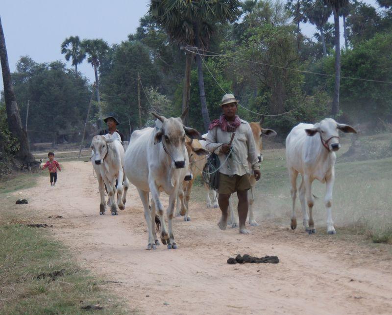 Sojourn village 2