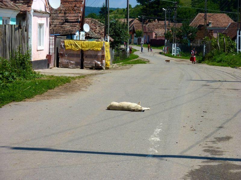 ROMANIA 54