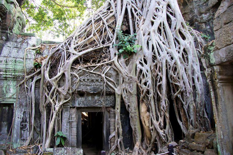 Temples of cambodia 7