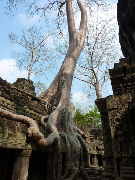 Temples of cambodia 2 (1)