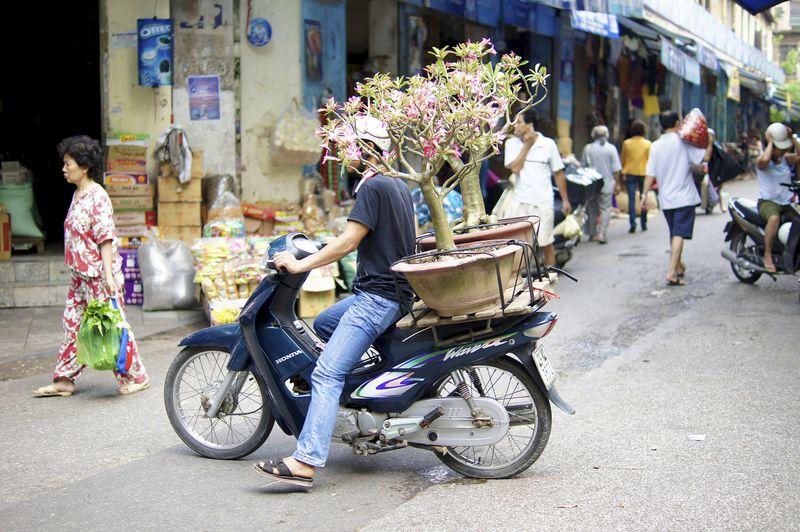Hanoi 226