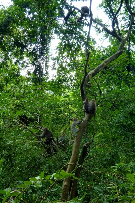 Bali blog 64
