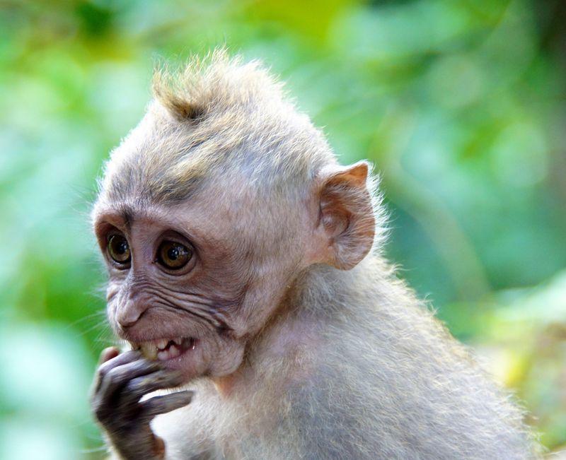 Bali blog 63