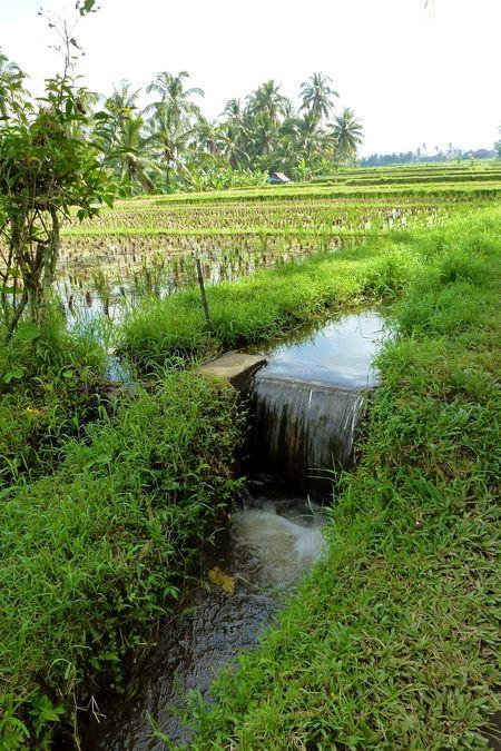 Bali blog 37