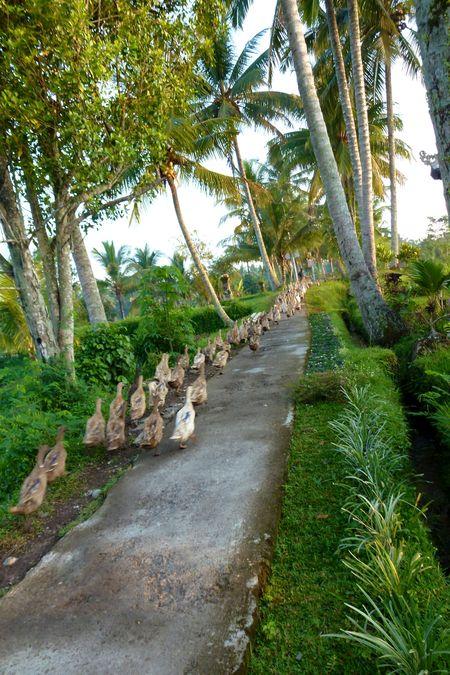 Bali blog 31
