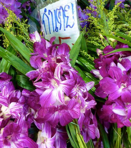 BANGKOK APRIL 2012 19