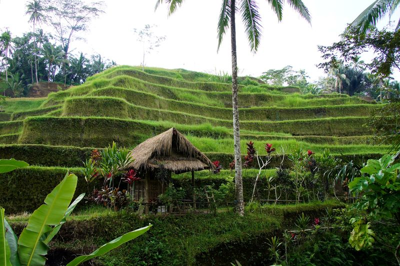 Bali blog 70