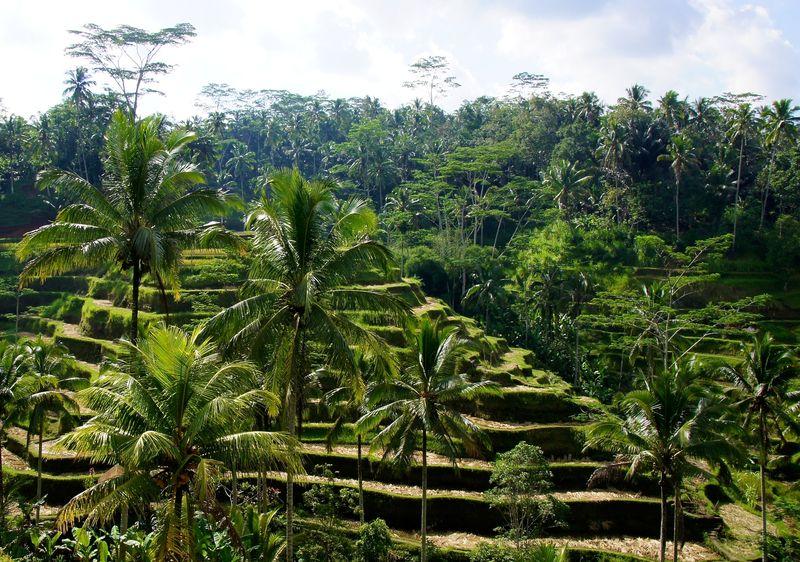 Bali blog 71