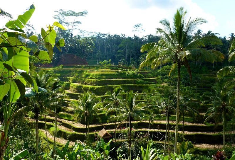 Bali blog 72