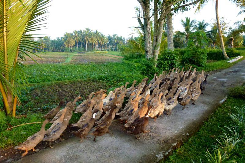 Bali blog 30