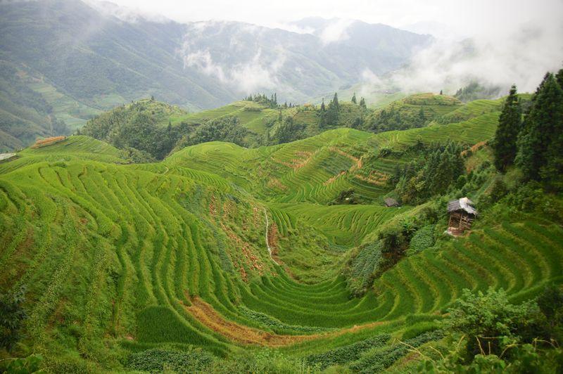 Rice fields china 58