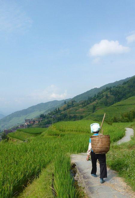 Rice fields china 38