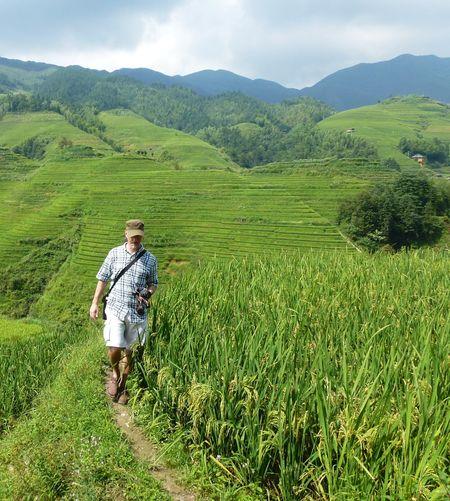 Rice fields china 47