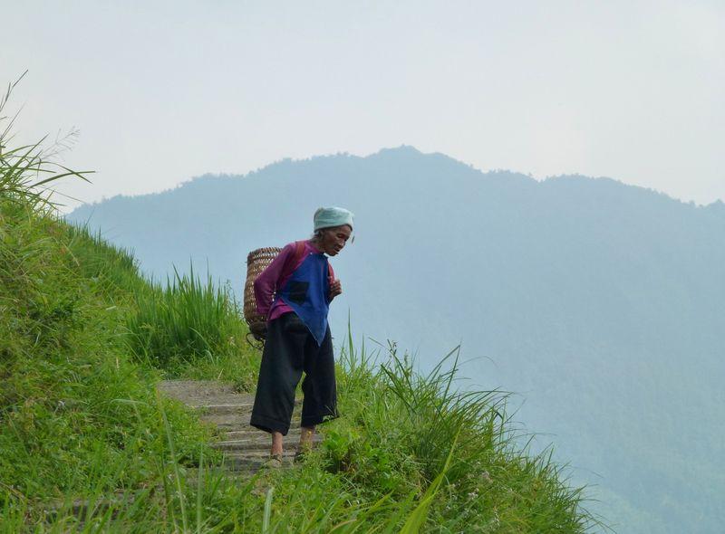 Rice fields china 10
