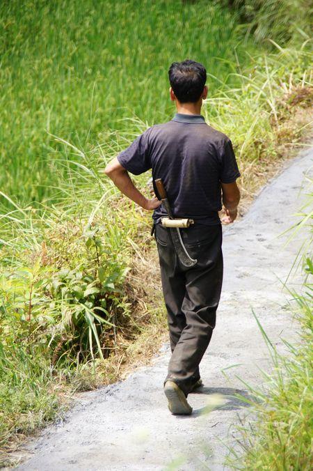 Rice fields china 32