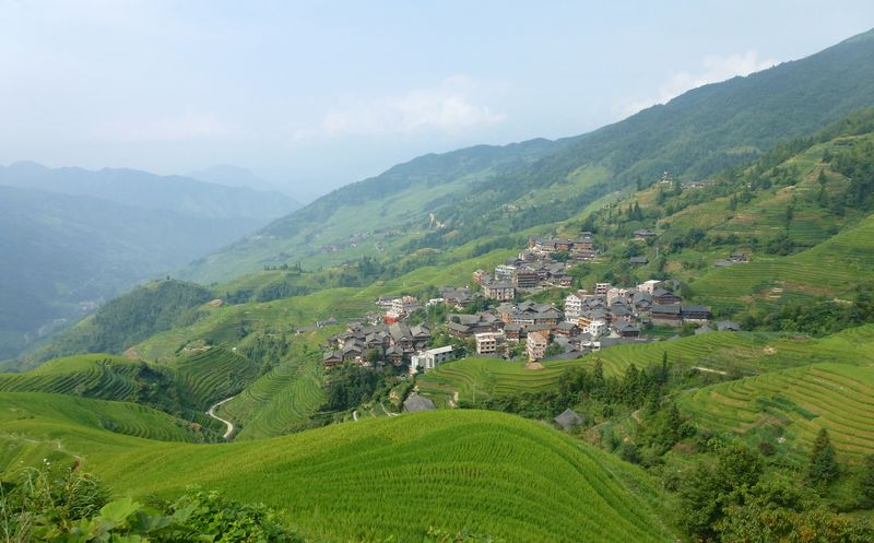 Rice fields china 42