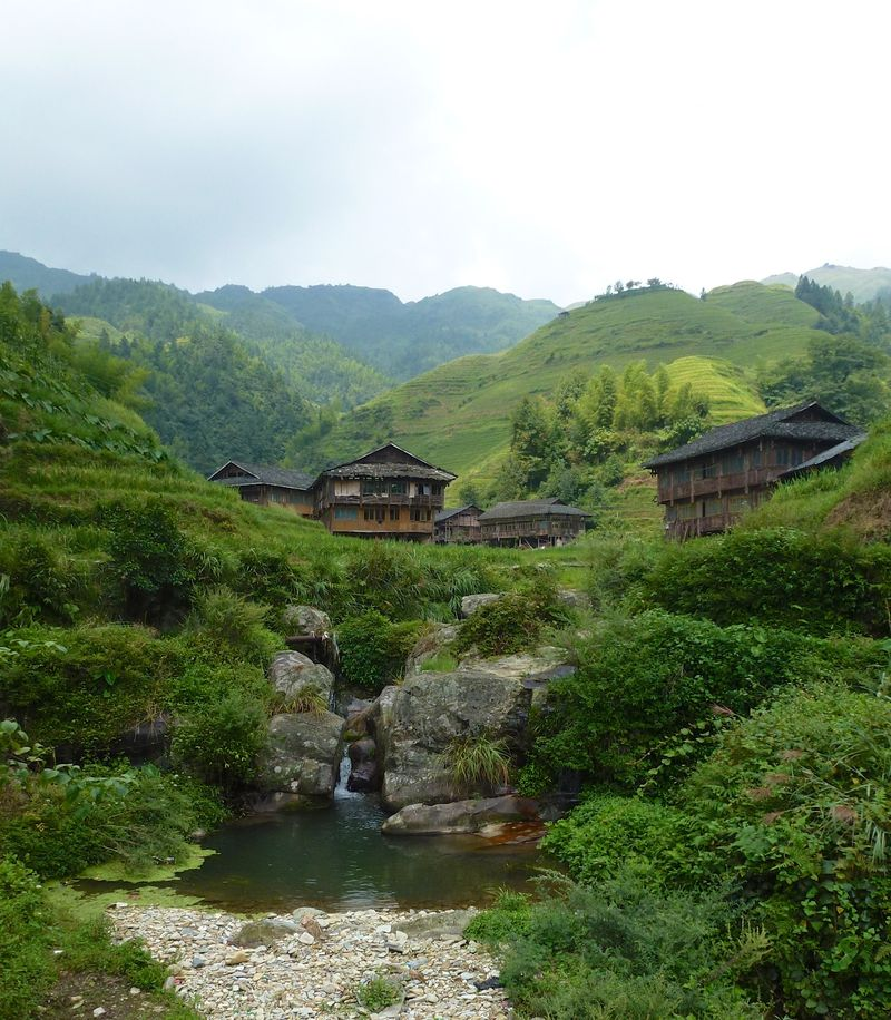 Rice fields china 44