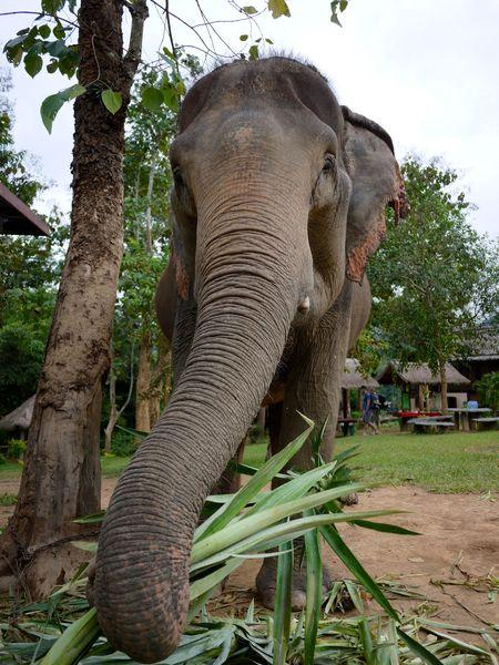 ELEPHANT RIDE 10