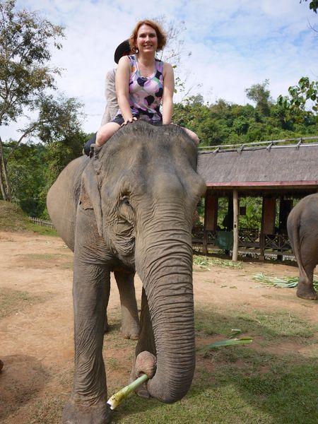 ELEPHANT RIDE 15