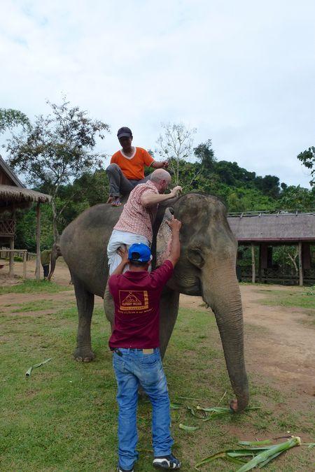 ELEPHANT RIDE 23
