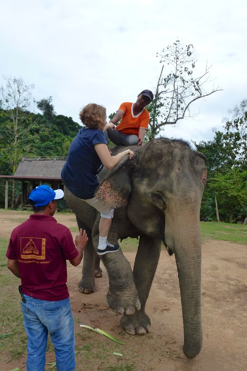 ELEPHANT RIDE 33