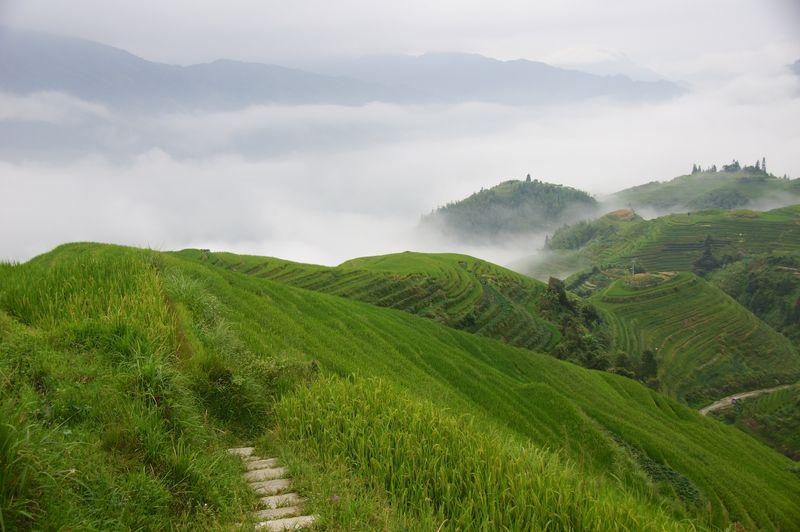 Rice fields china 56