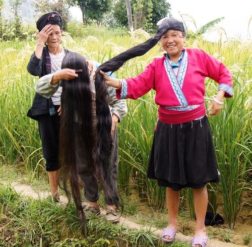 Rice fields china 22