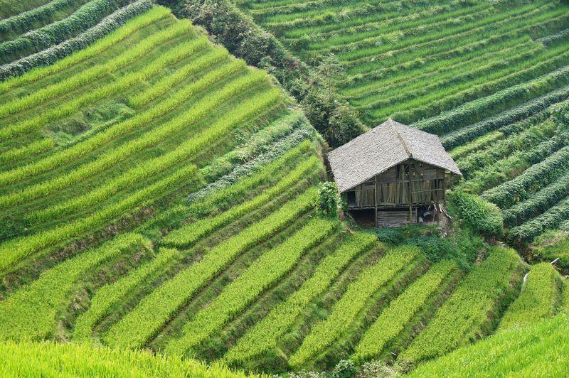 Rice fields china 18