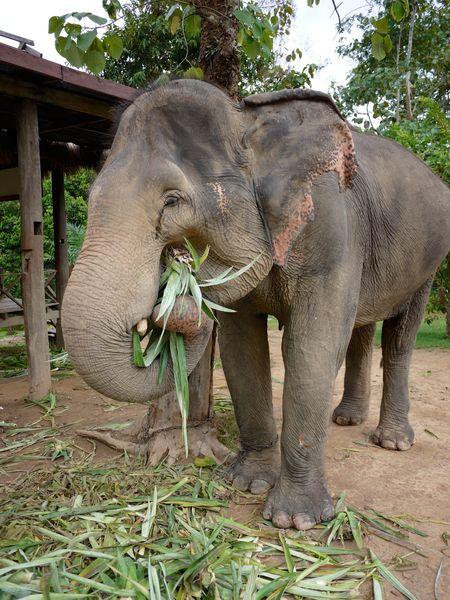 ELEPHANT RIDE 9