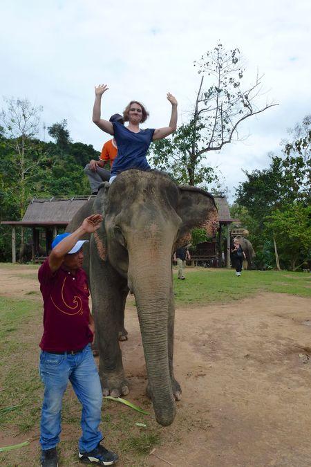 ELEPHANT RIDE 35