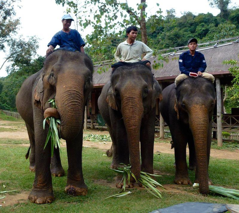 ELEPHANT RIDE 62
