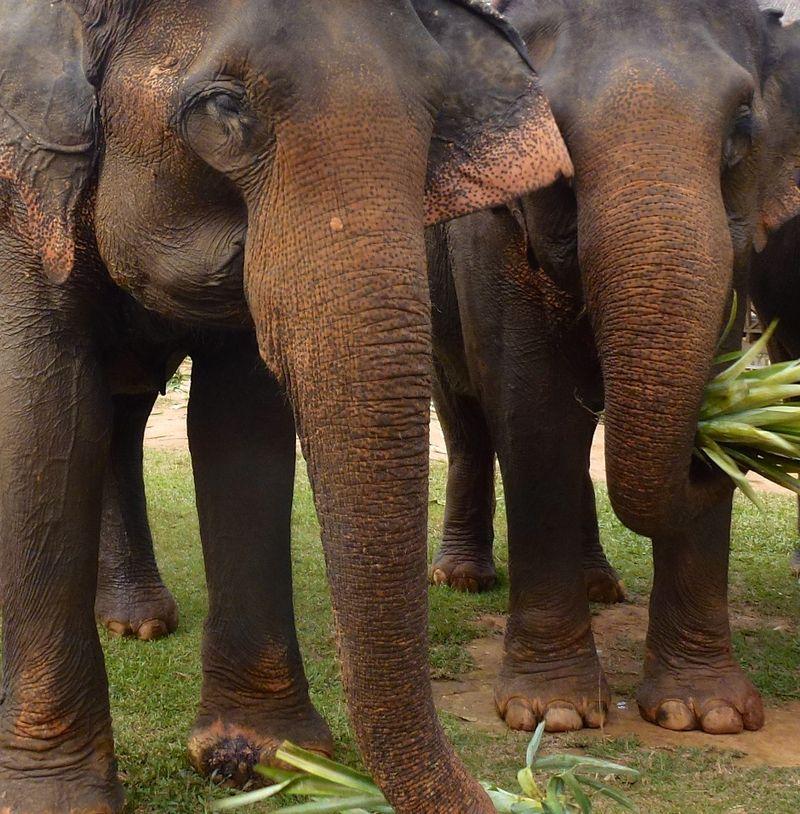 ELEPHANT RIDE 61