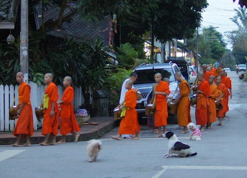 Monk procession 13