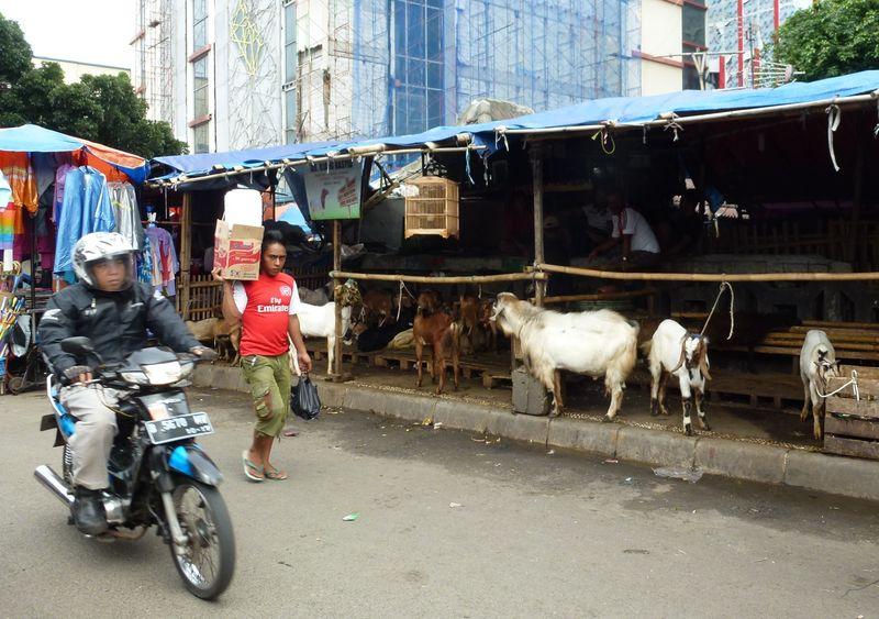 Jakarta 47