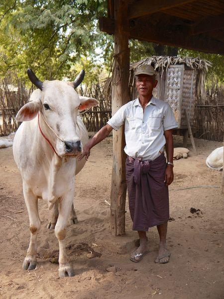 Bagan 59