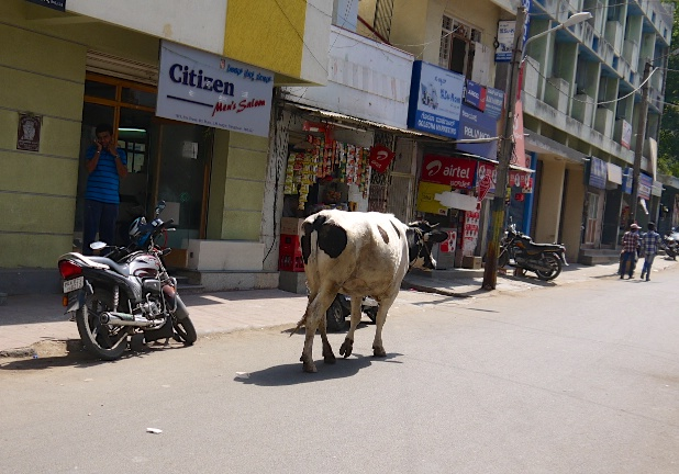 Bangalore India 29