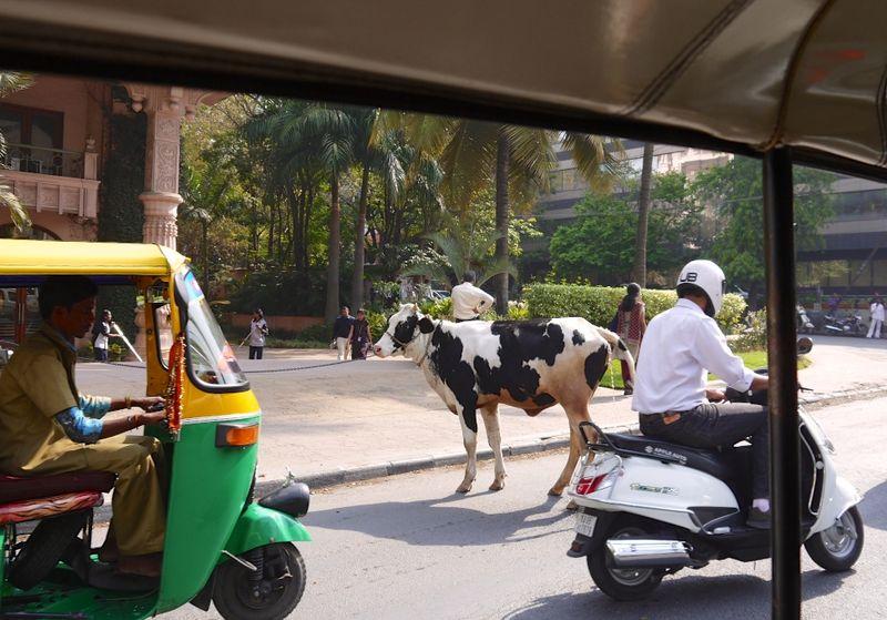 Bangalore India 30