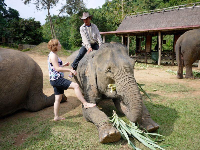ELEPHANT RIDE 11
