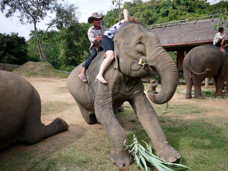 ELEPHANT RIDE 13
