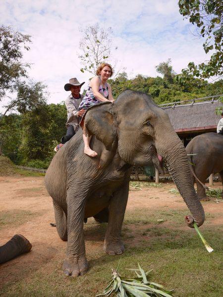 ELEPHANT RIDE 14