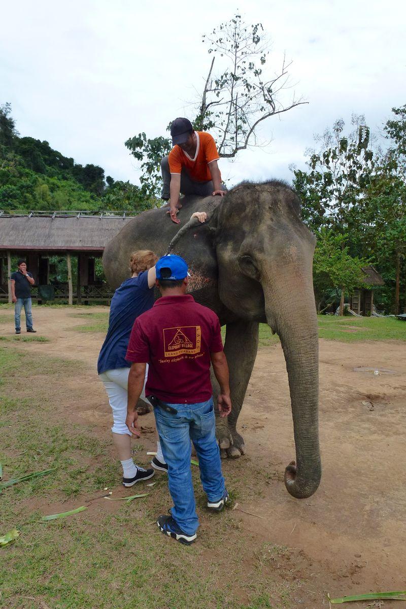 ELEPHANT RIDE 32
