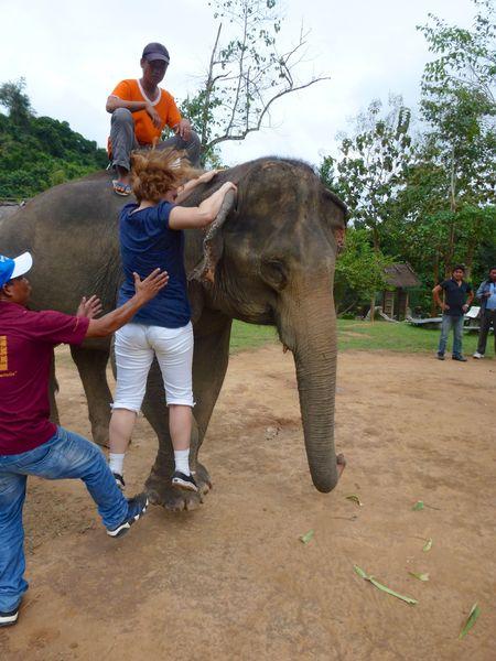 ELEPHANT RIDE 43