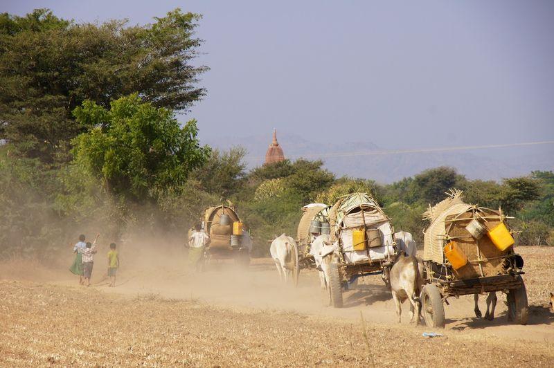 Bagan 37
