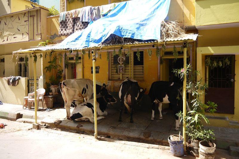 Bangalore India 26