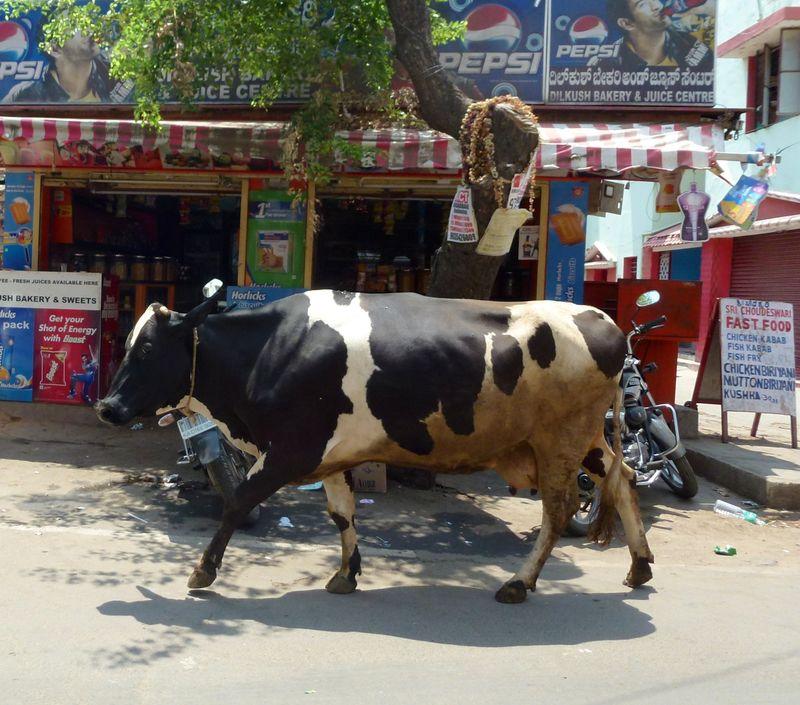 Bangalore India 32