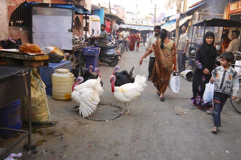 Bangalore India 51
